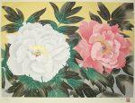 中島千波「紅白富貴花」木版画 30×41.5cm