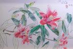 中島千波「紅孔雀椿」パステル38.5×58cm