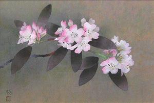 松本勝「石楠花」日本画