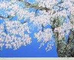中島千波「富士桜」版画シルクスクリーン41×53cm