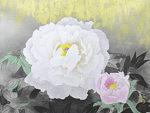 松尾敏男「牡丹晨光」木版画35×45.5cm