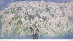 中島千波「身延山枝垂桜(1)」版画40×80.4cm