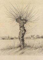 長谷川潔「ニレの樹」銅版画28.5×21cm