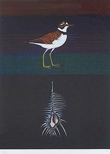 加山又造「千鳥とほね貝 1989」銅版画