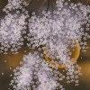 中島千波「春朧枝垂櫻」版画45.5×28.8cm