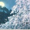 東山魁夷「宵桜(新復刻画)」版画46.4×65.4cm